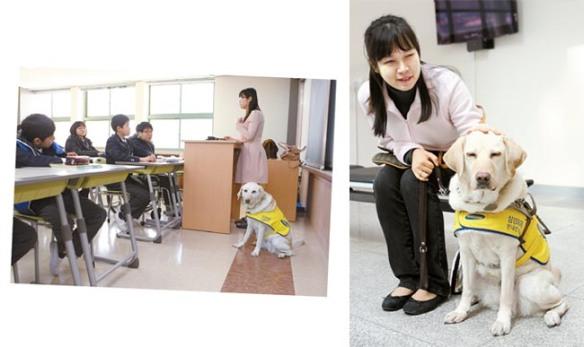 Cão guia - Samsung